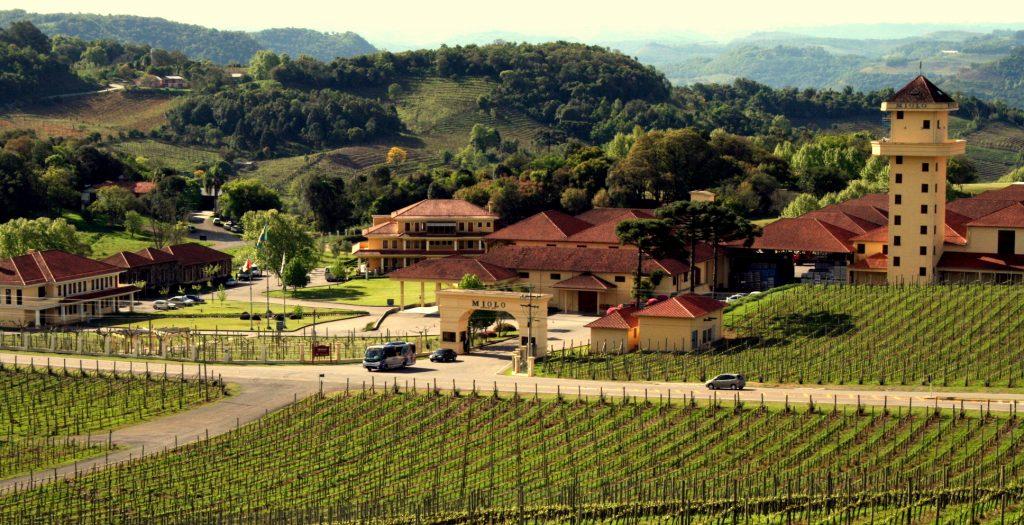 vinícolas na Serra Gaúcha Miolo